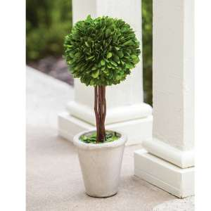 Preserved Boxwood Topiary #f021s