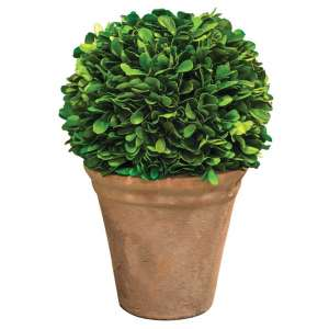 Potted Preserved Boxwood Ball #F170504